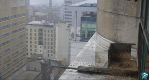 harrisburg, pennsylvania, webcam, pa, peregrine falcon, claims