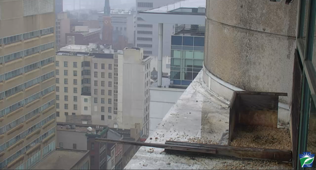 harrisburg, pennsylvania, webcam, pa, peregrine falcon, claims